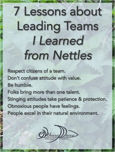 Seven Lessons about Leading Teams I Learned from Nettles